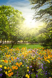 Parterre plenty of flowers. Rounded by trees against sunset sunbeams Stock Images