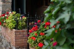 Parterre rouge sur la rue Photographie stock