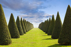 Parterre from Versailles Chateau. Parterre of conical hedges lines and lawn from Versailles Chateau. France series Stock Images