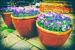 Parterres tricolores de fleurs d'alto dans la rue de Wroclaw image libre de droits