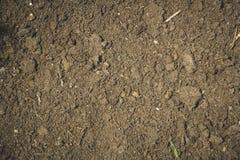 Parteru tło z suchymi liśćmi Zdjęcie Royalty Free