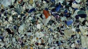 Partes brilhantes de shell Imagem de Stock