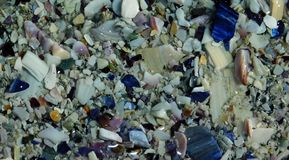 Partes brilhantes de shell Fotos de Stock