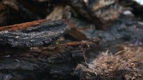 Partes de madeira de queda filme