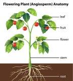 Partes de uma planta ilustração royalty free