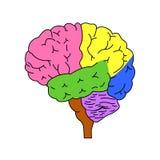 Partes do cérebro ilustração stock
