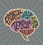 Partes do cérebro humano ilustração stock