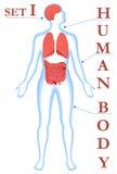 Partes do corpo. Imagens de Stock