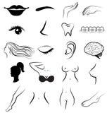 Partes do corpo das mulheres humanas ilustração royalty free