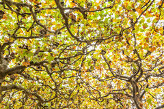 Partes superiores da árvore Foto de Stock Royalty Free