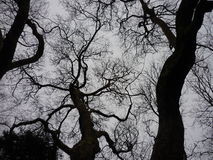 Partes superiores da árvore Fotografia de Stock Royalty Free