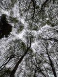 Partes superiores da árvore imagens de stock