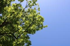 Partes superiores da árvore de baixo de Fotografia de Stock