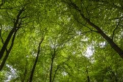 Partes superiores da árvore - folhas das árvores de floresta Imagens de Stock