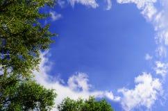 Partes superiores da árvore no céu azul Fotos de Stock Royalty Free