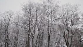 Partes superiores nevados bonitas das árvores no inverno vídeos de arquivo
