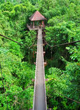 Partes superiores tailandesas da árvore fotografia de stock