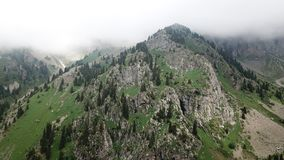Partes superiores verdes da montanha nas nuvens Há spruce, coníferas, grama verde Fotografia de Stock