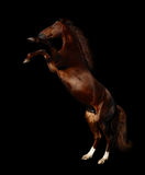 Partes traseiras da égua de Budenny Imagens de Stock Royalty Free