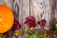 Parthenocissus with Orange Pumpkin on Wooden Rustik Background Royalty Free Stock Image