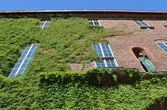Parthenocissus tricuspidata at Stockholm City Hall Stock Photography