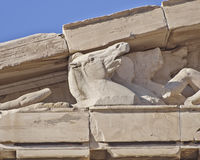 Parthenon west pediment detail, horse head Royalty Free Stock Photos