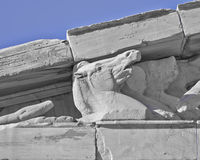 Parthenon west pediment, horse head, Athens Greece Royalty Free Stock Images