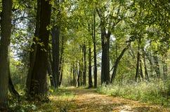 Parthway soleggiato nella foresta di autunno Fotografie Stock Libere da Diritti