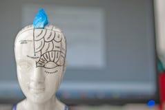 Parti del cervello umano e delle funzioni per ogni parte Nei precedenti c'è un monitor e una tastiera Fotografia Stock Libera da Diritti