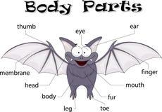 Parti del corpo del pipistrello Immagine Stock Libera da Diritti