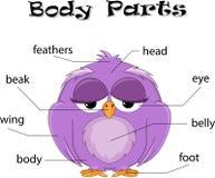 Parti del corpo dell'uccello Immagini Stock