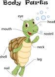 Parti del corpo della tartaruga Immagini Stock