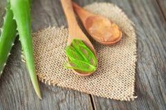 Parti di aloe vera Erba utile per cura di pelle e cura di capelli Fotografie Stock