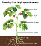 Parti di una pianta royalty illustrazione gratis
