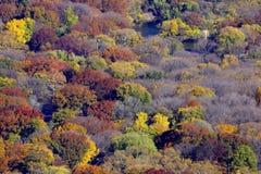 Parti superiori degli alberi Immagini Stock