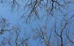 Parti superiori dell'albero Fotografie Stock Libere da Diritti