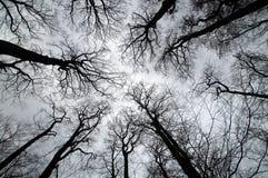 Parti superiori dell'albero immagini stock
