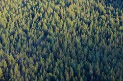 Parti superiori dell'albero forestale Fotografie Stock