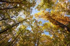 Parti superiori variopinte dell'albero Fotografia Stock