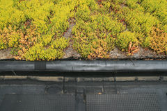 Partial green roof detail Royalty Free Stock Image