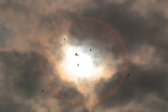 Partial solar eclipse Stock Images