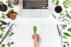 Partial top view of person holding green leaf at workplace with laptop, cup of coffee, green leaves and office supplies Stock Photo