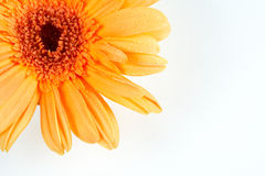 Partial view of a daisy Royalty Free Stock Images