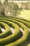 Partial view of a maze. Partial view of a cedar hedge maze Royalty Free Stock Photo