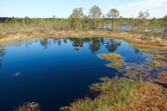 Partial view of a small lake in the middle of the Viru Raba bog. In Estonia in summer day Royalty Free Stock Images