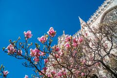 Free Partial View To Duomo Of Milan In Springtime With Magnolia Flowers In A Sunny Happy Day Stock Photography - 159819012
