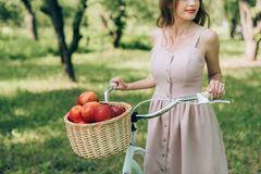 Partial view of woman in dress holding retro bicycle with wicker basket full of ripe apples. At countryside stock photography