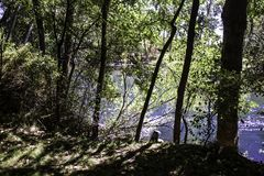 Boise River. A partially concealed view of the Boise River royalty free stock photo