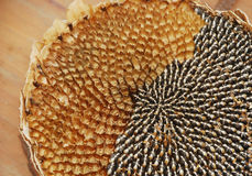Partially De-Seeded Sunflower Head. A close up of the black and white seeds in the dried head of a sunflower. The flower head has been partially de-seeded Royalty Free Stock Photos
