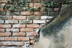 Partially exposed brickwork with plaster and creep Stock Images